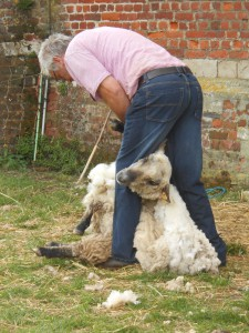 promenade moutons 2015 049