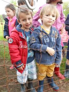 promenade moutons 2015 060