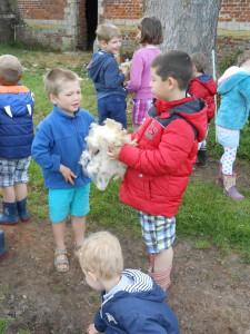 promenade moutons 2015 070